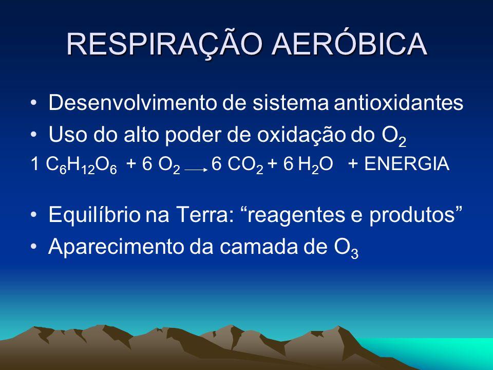 RESPIRAÇÃO AERÓBICA Desenvolvimento de sistema antioxidantes