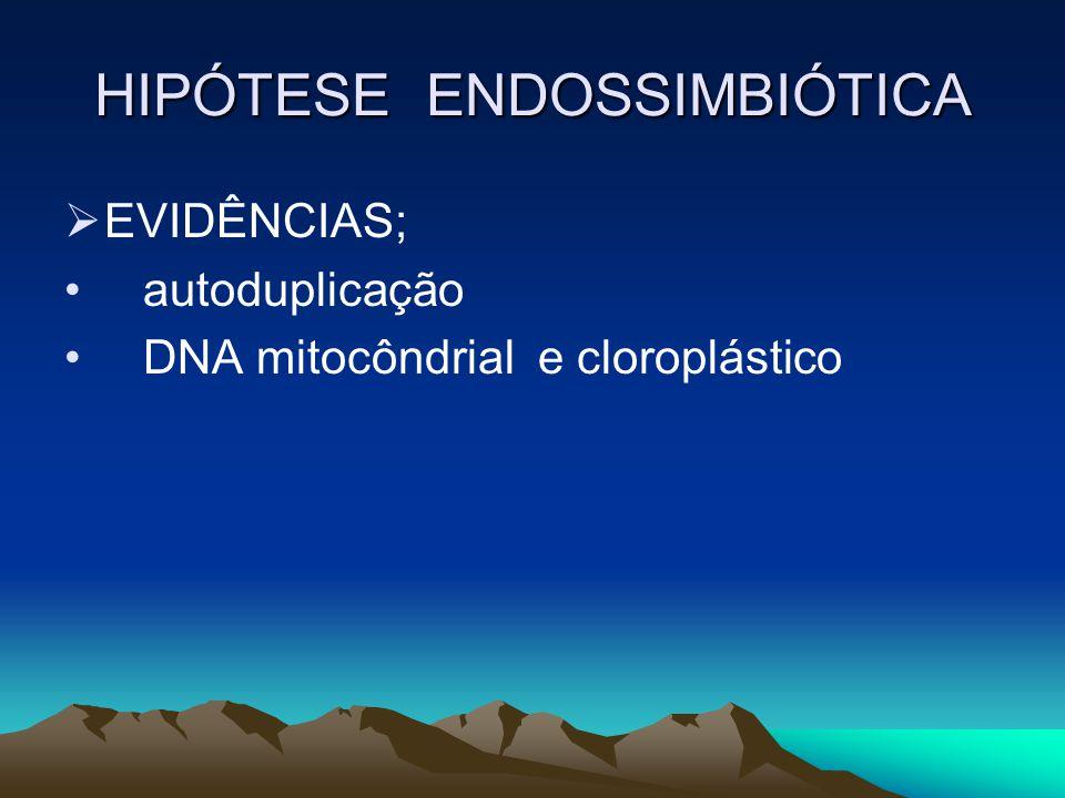 HIPÓTESE ENDOSSIMBIÓTICA