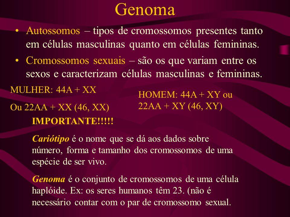 Genoma Autossomos – tipos de cromossomos presentes tanto em células masculinas quanto em células femininas.
