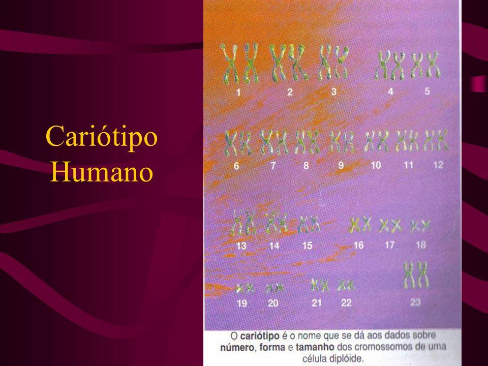 Cariótipo Humano