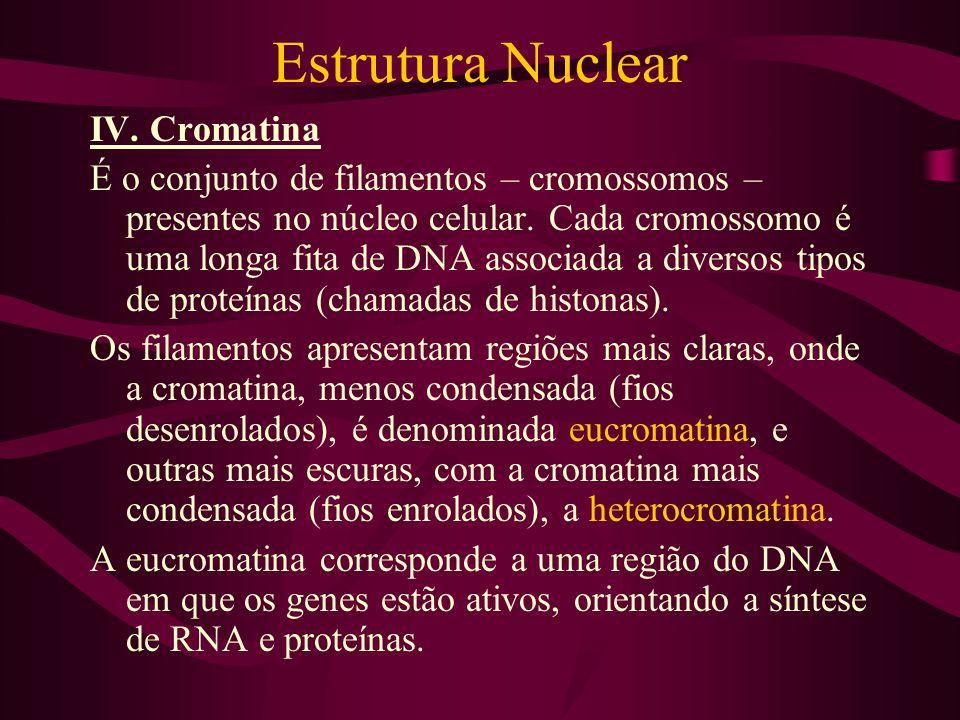 Estrutura Nuclear IV. Cromatina