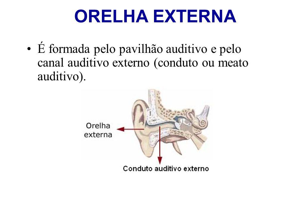 ORELHA EXTERNA É formada pelo pavilhão auditivo e pelo canal auditivo externo (conduto ou meato auditivo).