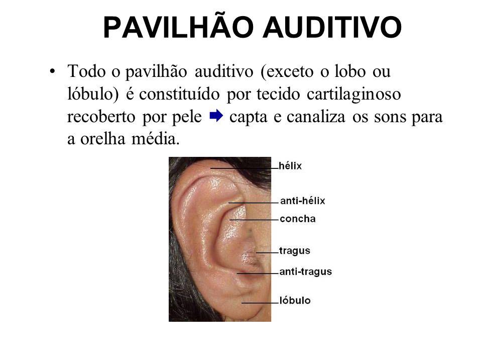 PAVILHÃO AUDITIVO