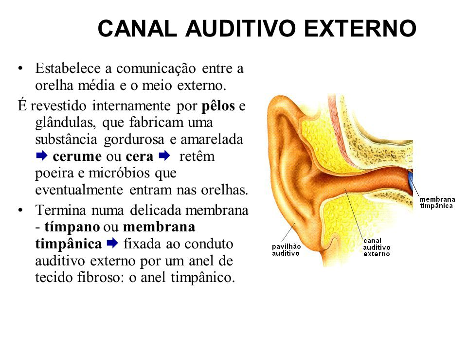 CANAL AUDITIVO EXTERNO