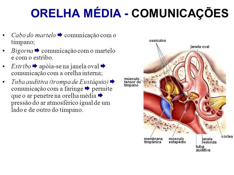ORELHA MÉDIA - COMUNICAÇÕES