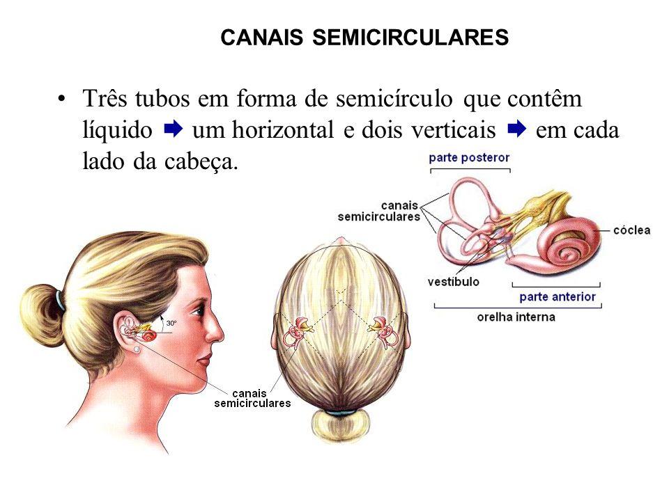 CANAIS SEMICIRCULARES