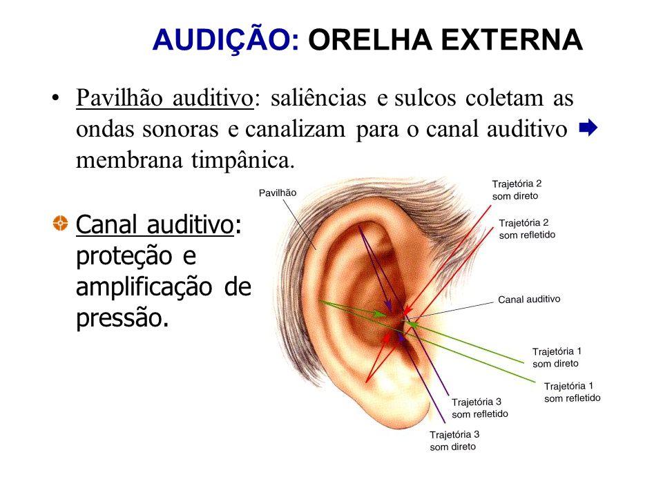 AUDIÇÃO: ORELHA EXTERNA