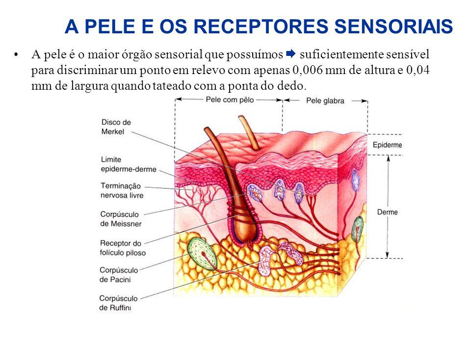A PELE E OS RECEPTORES SENSORIAIS