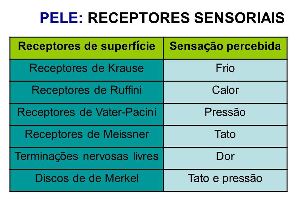 PELE: RECEPTORES SENSORIAIS