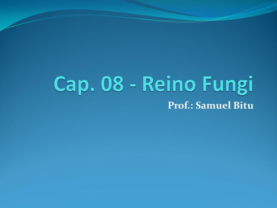 Prof.: Samuel Bitu