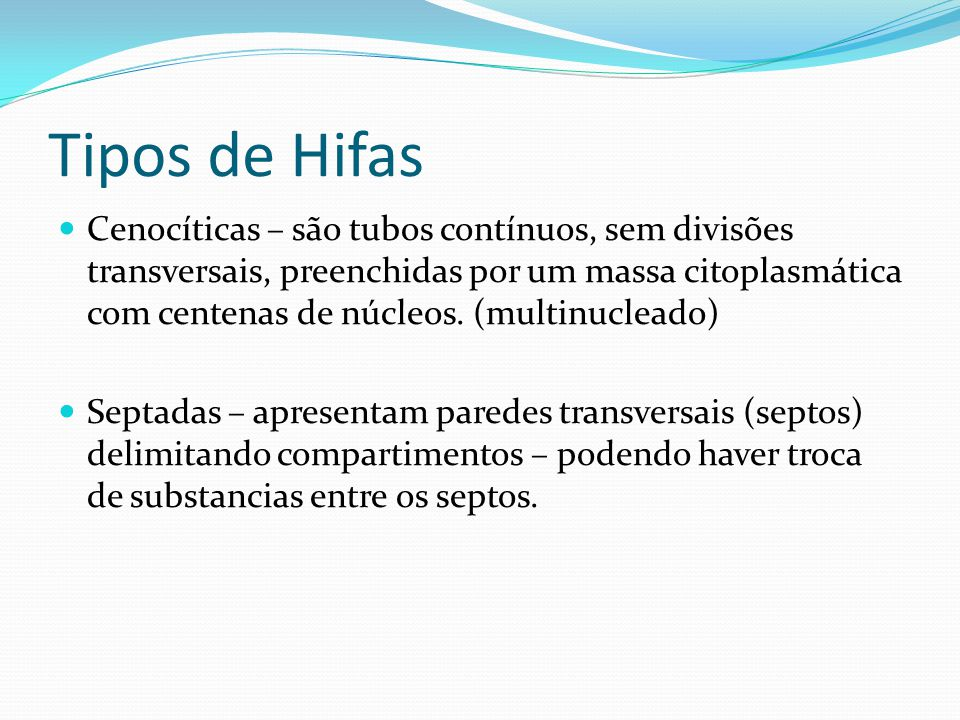 Tipos de Hifas