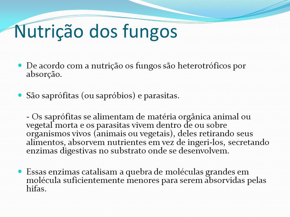 Nutrição dos fungos De acordo com a nutrição os fungos são heterotróficos por absorção. São saprófitas (ou sapróbios) e parasitas.