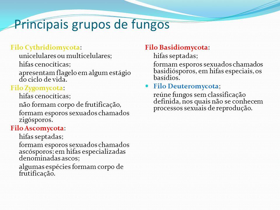 Principais grupos de fungos