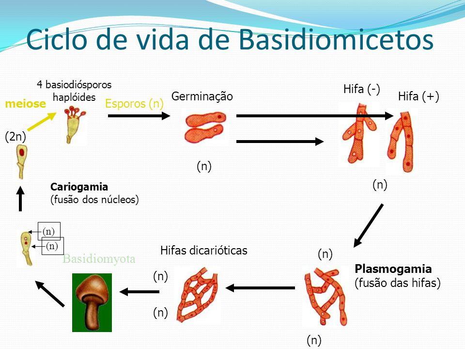 Ciclo de vida de Basidiomicetos