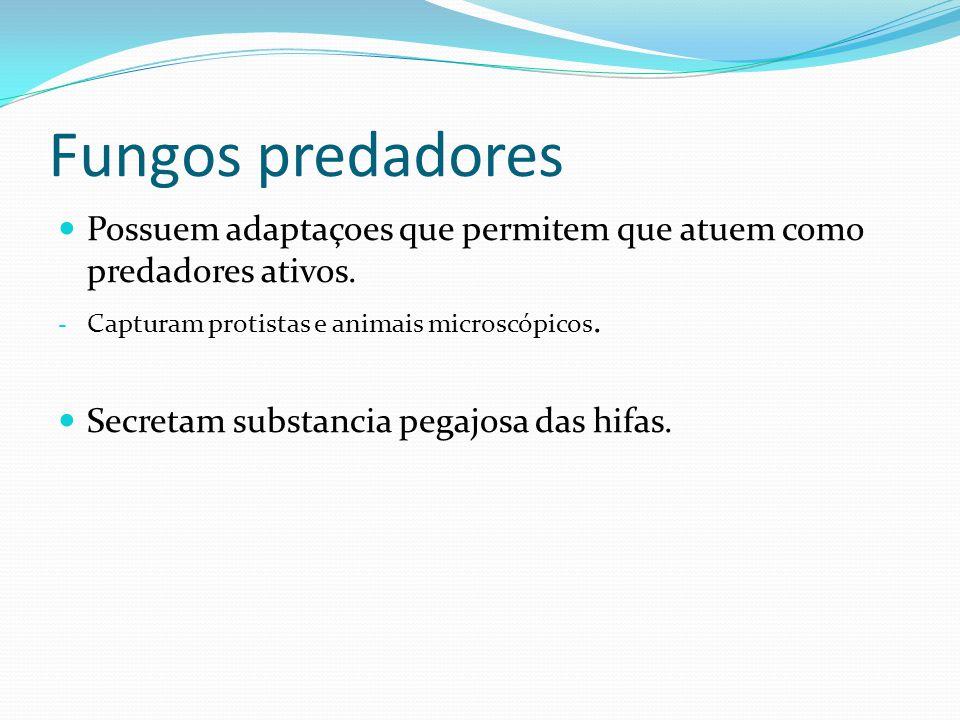 Fungos predadores Possuem adaptaçoes que permitem que atuem como predadores ativos. Capturam protistas e animais microscópicos.