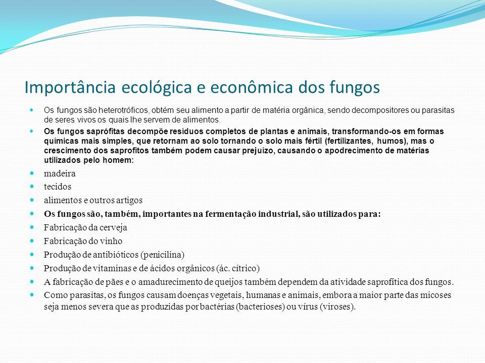 Importância ecológica e econômica dos fungos