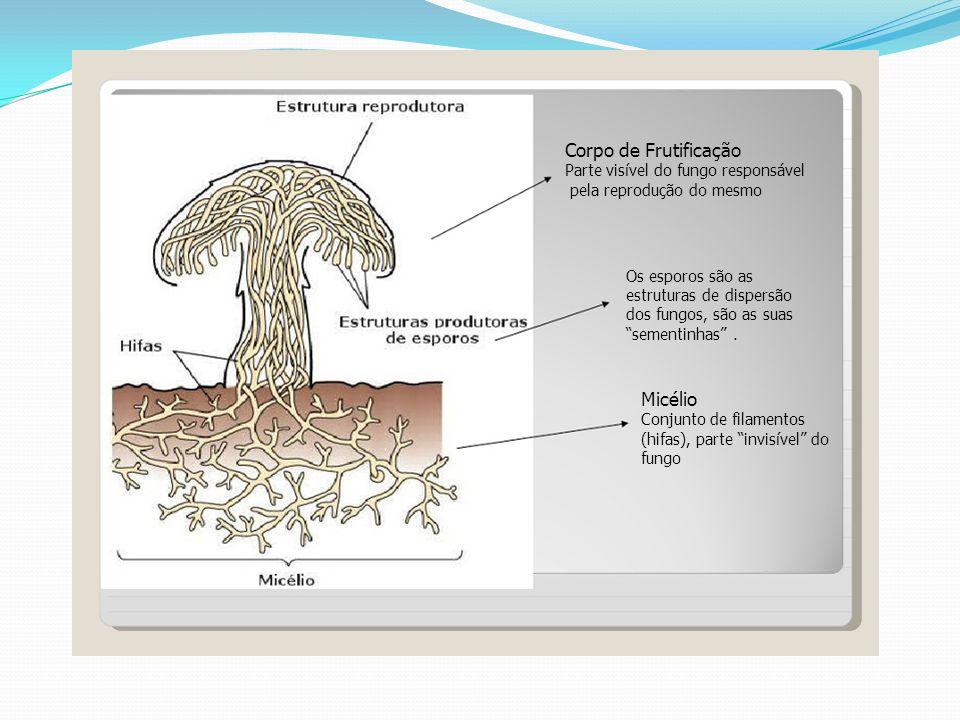 Corpo de Frutificação Micélio Parte visível do fungo responsável