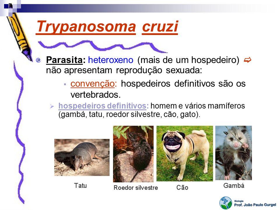 Trypanosoma cruzi Parasita: heteroxeno (mais de um hospedeiro)  não apresentam reprodução sexuada: