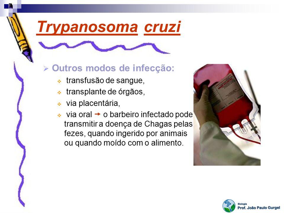Trypanosoma cruzi Outros modos de infecção: transfusão de sangue,