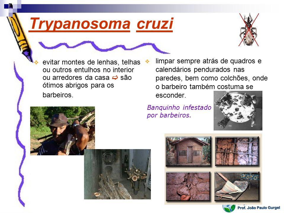 Trypanosoma cruzi limpar sempre atrás de quadros e calendários pendurados nas paredes, bem como colchões, onde o barbeiro também costuma se esconder.