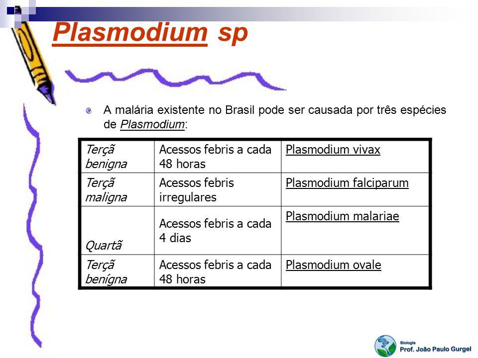 Plasmodium sp A malária existente no Brasil pode ser causada por três espécies de Plasmodium: Terçã benigna.