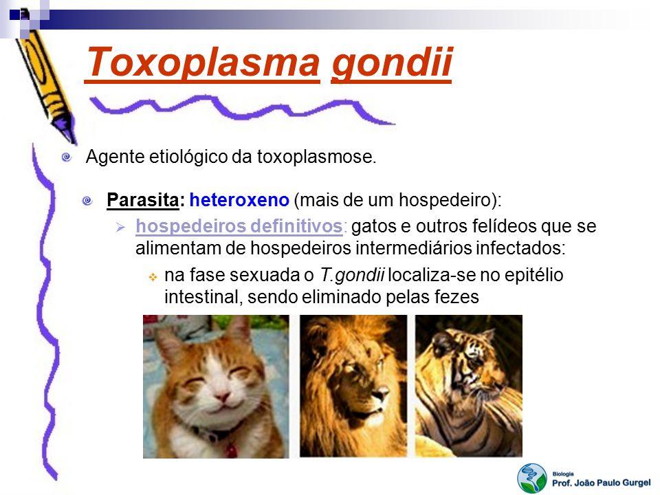 Toxoplasma gondii Agente etiológico da toxoplasmose.