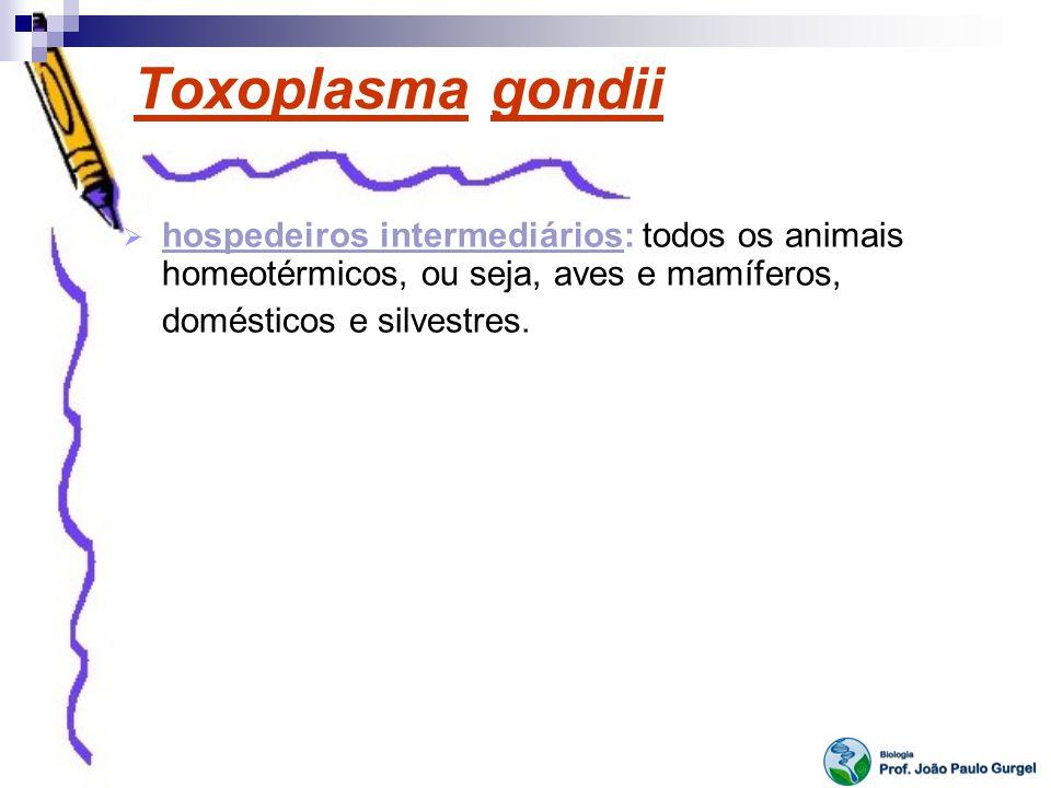 Toxoplasma gondii hospedeiros intermediários: todos os animais homeotérmicos, ou seja, aves e mamíferos, domésticos e silvestres.