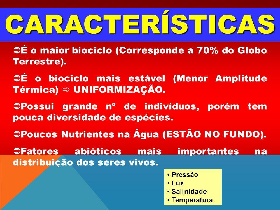 CARACTERÍSTICAS É o maior biociclo (Corresponde a 70% do Globo Terrestre). É o biociclo mais estável (Menor Amplitude Térmica)  UNIFORMIZAÇÃO.