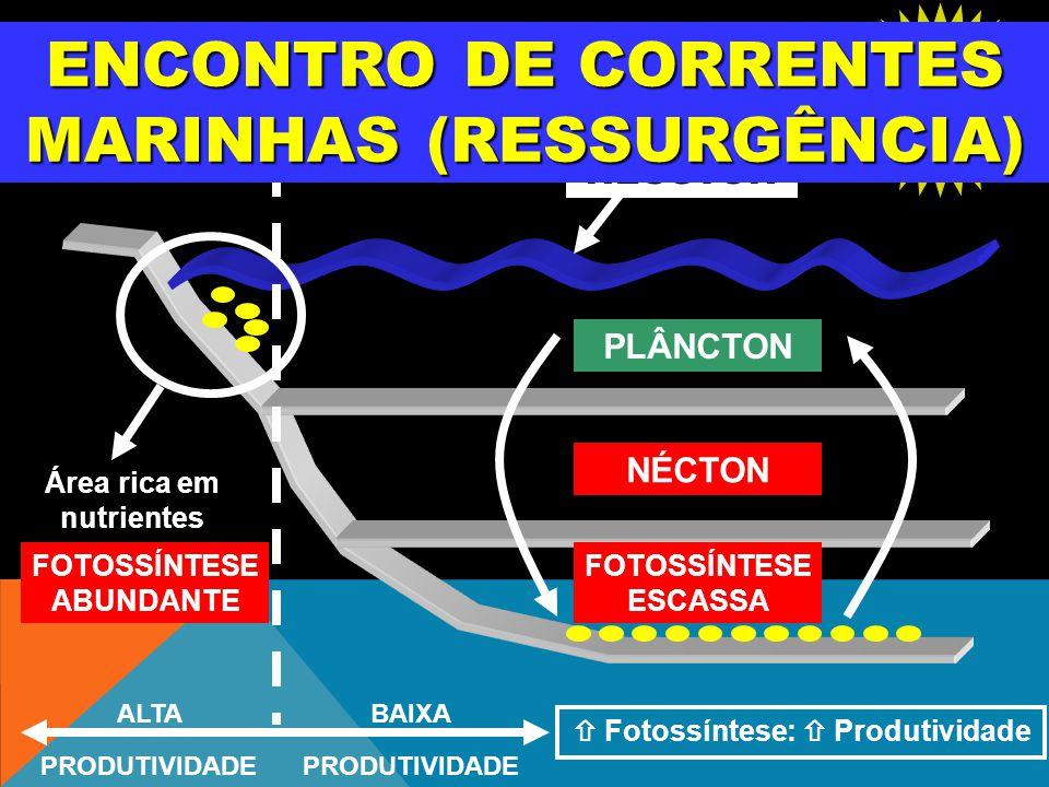 ENCONTRO DE CORRENTES MARINHAS (RESSURGÊNCIA)