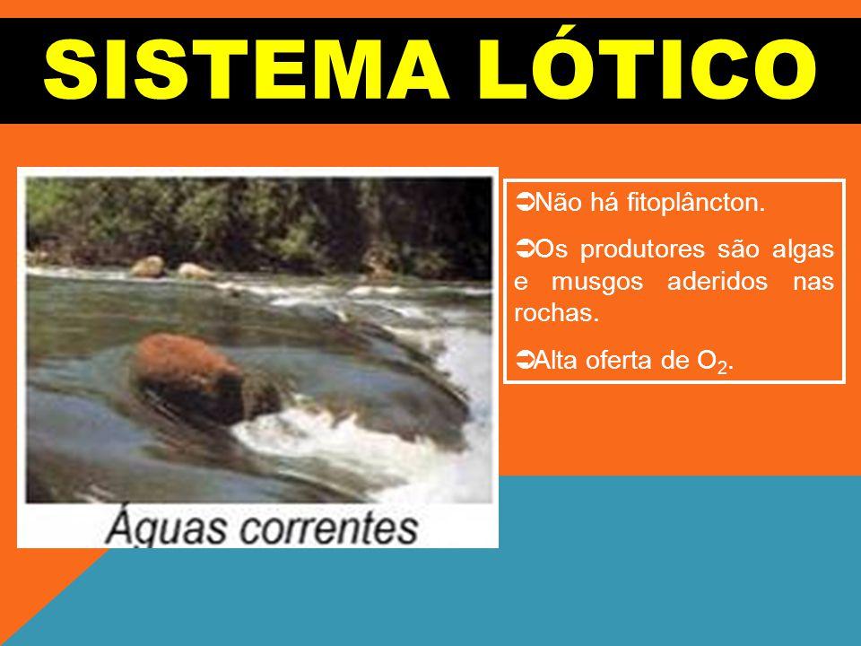 SISTEMA LÓTICO Não há fitoplâncton.