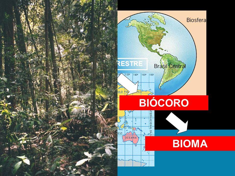 BIOSFERA BIOCICLO TERRESTRE BIÓCORO FLORESTAS BIOMA FLORESTA TROPICAL