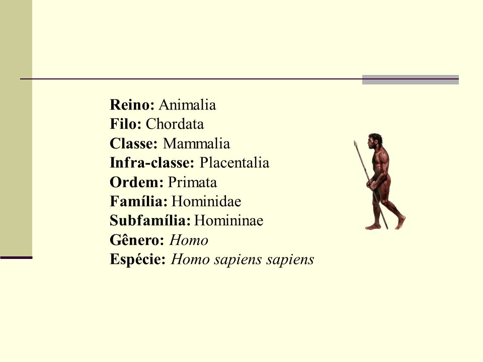 Reino: Animalia Filo: Chordata Classe: Mammalia Infra-classe: Placentalia Ordem: Primata Família: Hominidae Subfamília: Homininae Gênero: Homo Espécie: Homo sapiens sapiens
