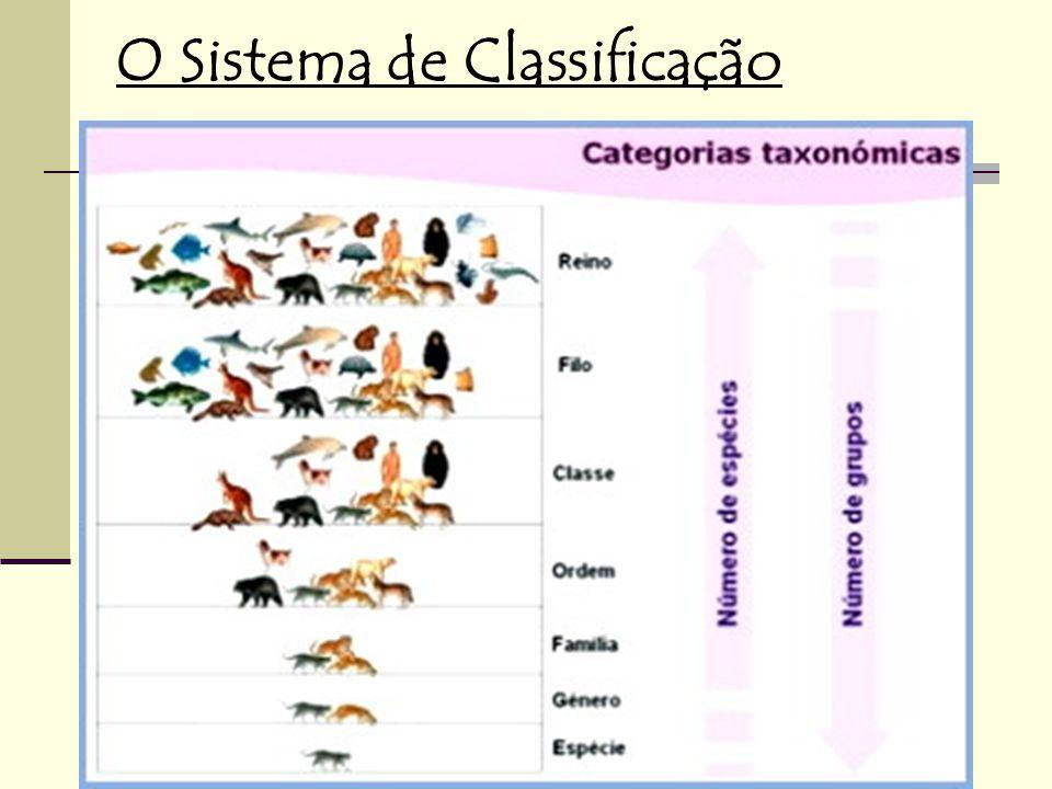 O Sistema de Classificação