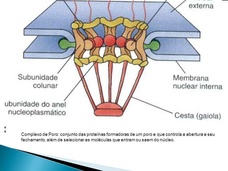 Complexo de Poro: conjunto das proteínas formadoras de um poro e que controla a abertura e seu fechamento, além de selecionar as moléculas que entram ou saem do núcleo.