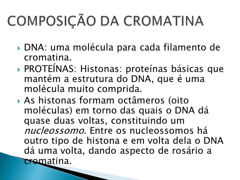 DNA: uma molécula para cada filamento de cromatina.