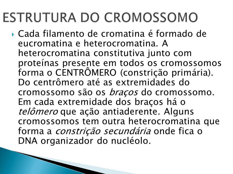 Cada filamento de cromatina é formado de eucromatina e heterocromatina