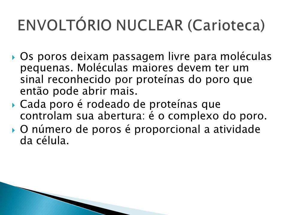 ENVOLTÓRIO NUCLEAR (Carioteca)