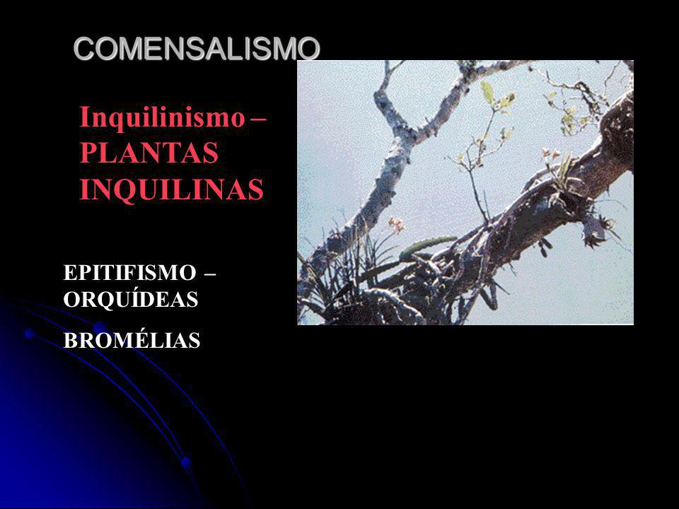 Inquilinismo –PLANTAS INQUILINAS