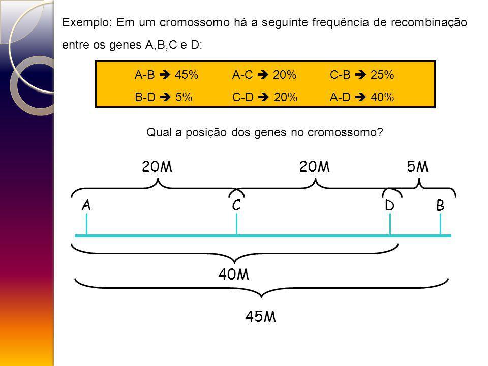 Qual a posição dos genes no cromossomo