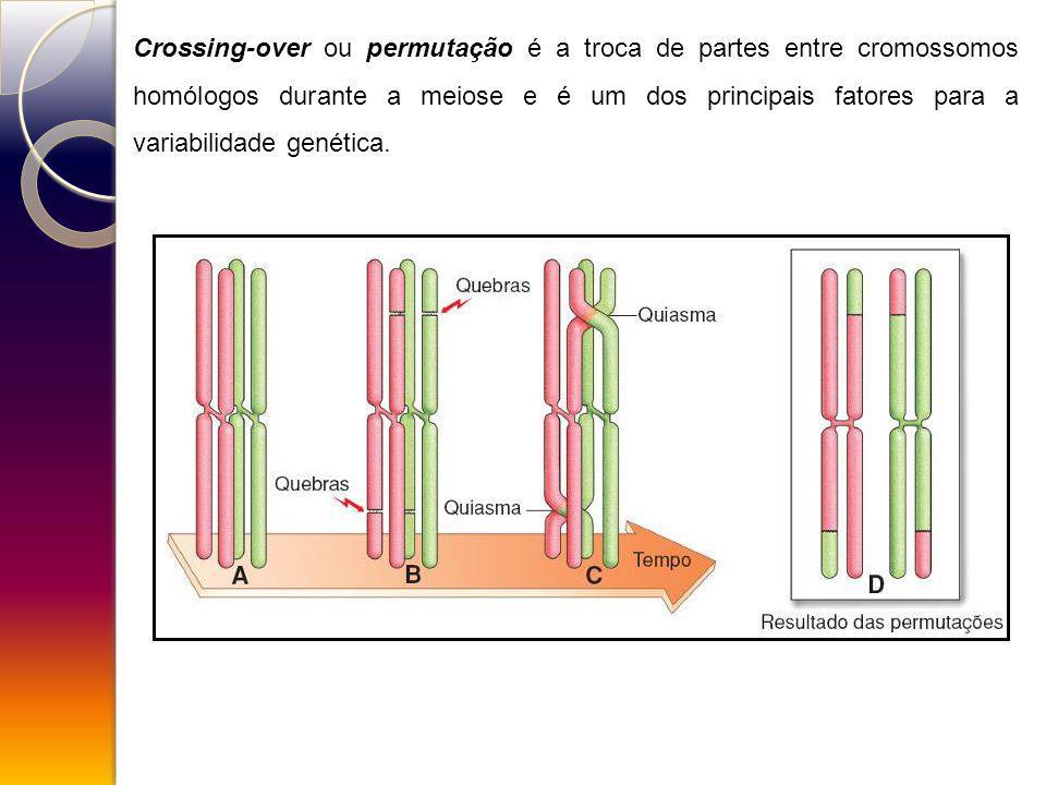 Crossing-over ou permutação é a troca de partes entre cromossomos homólogos durante a meiose e é um dos principais fatores para a variabilidade genética.