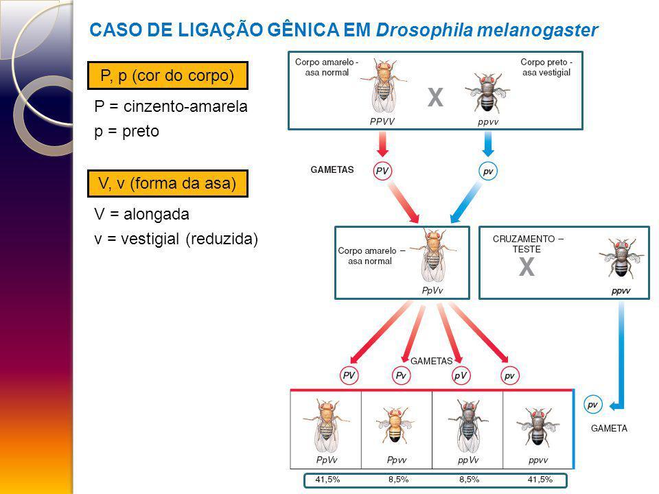 CASO DE LIGAÇÃO GÊNICA EM Drosophila melanogaster