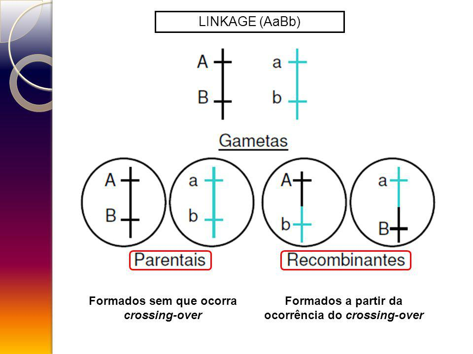 LINKAGE (AaBb) Formados sem que ocorra crossing-over