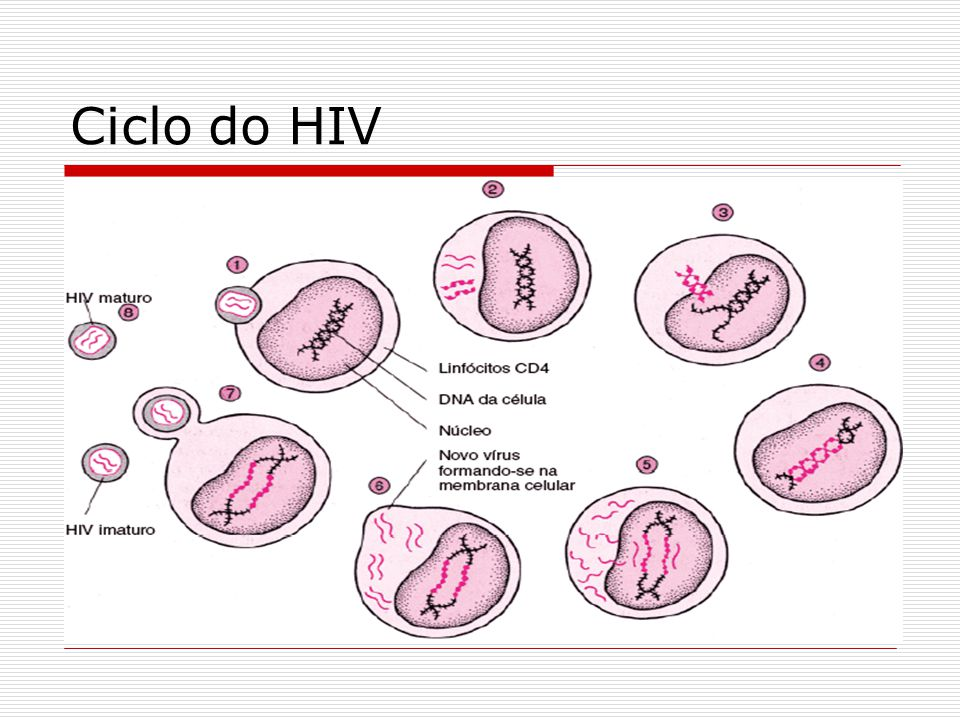 Ciclo do HIV