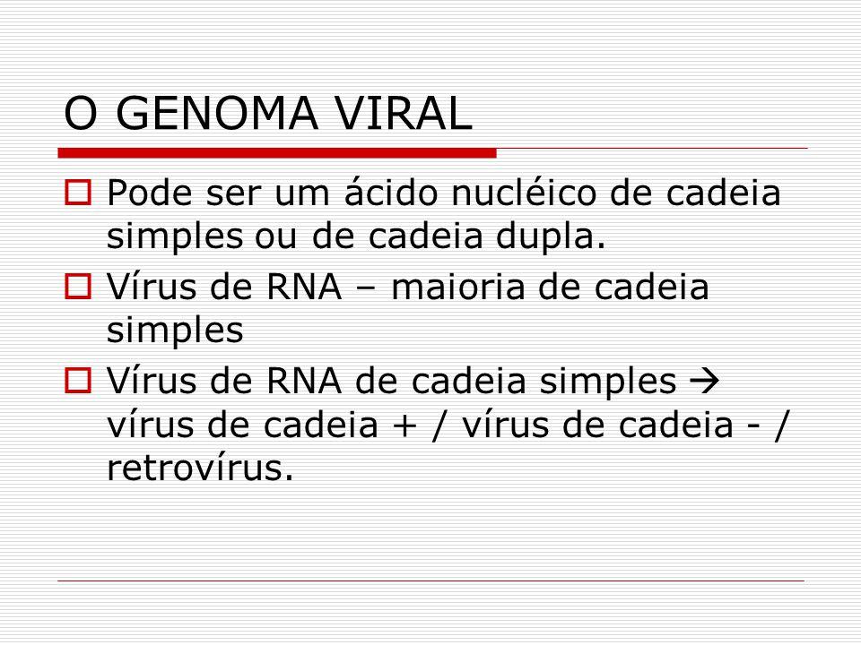 O GENOMA VIRAL Pode ser um ácido nucléico de cadeia simples ou de cadeia dupla. Vírus de RNA – maioria de cadeia simples.