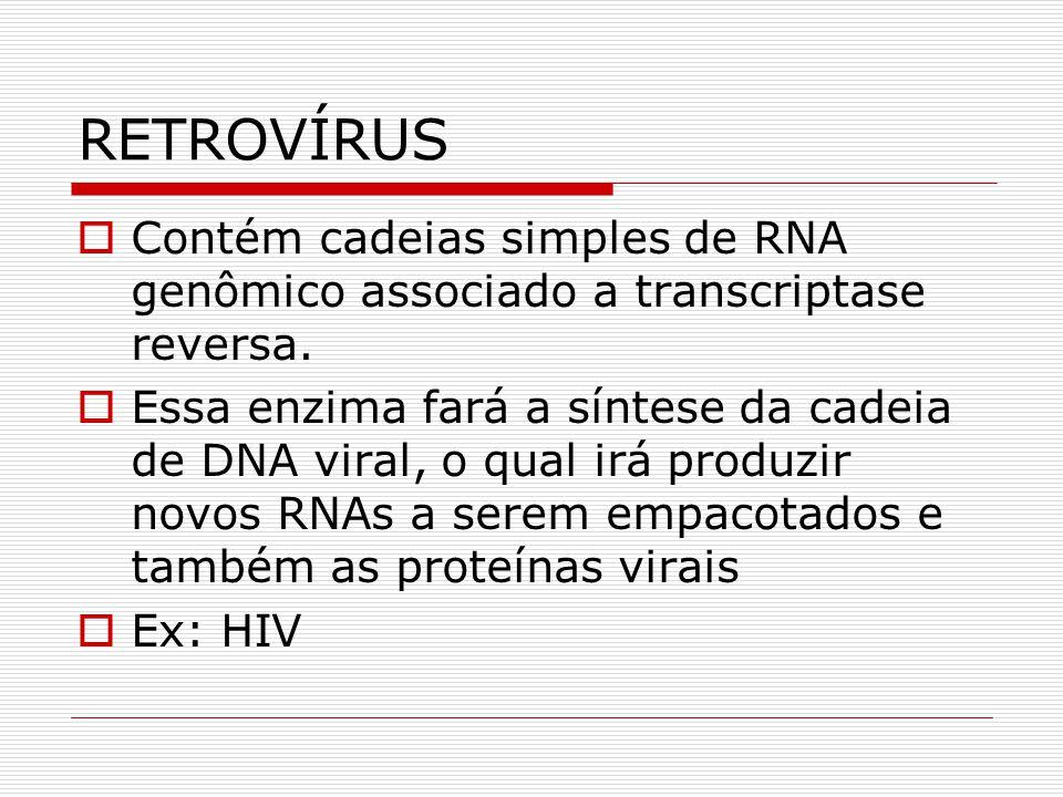 RETROVÍRUS Contém cadeias simples de RNA genômico associado a transcriptase reversa.