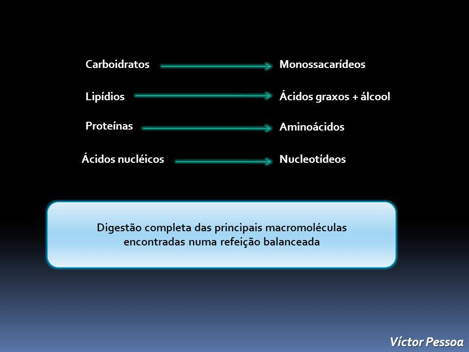 Víctor Pessoa Carboidratos Monossacarídeos Lipídios