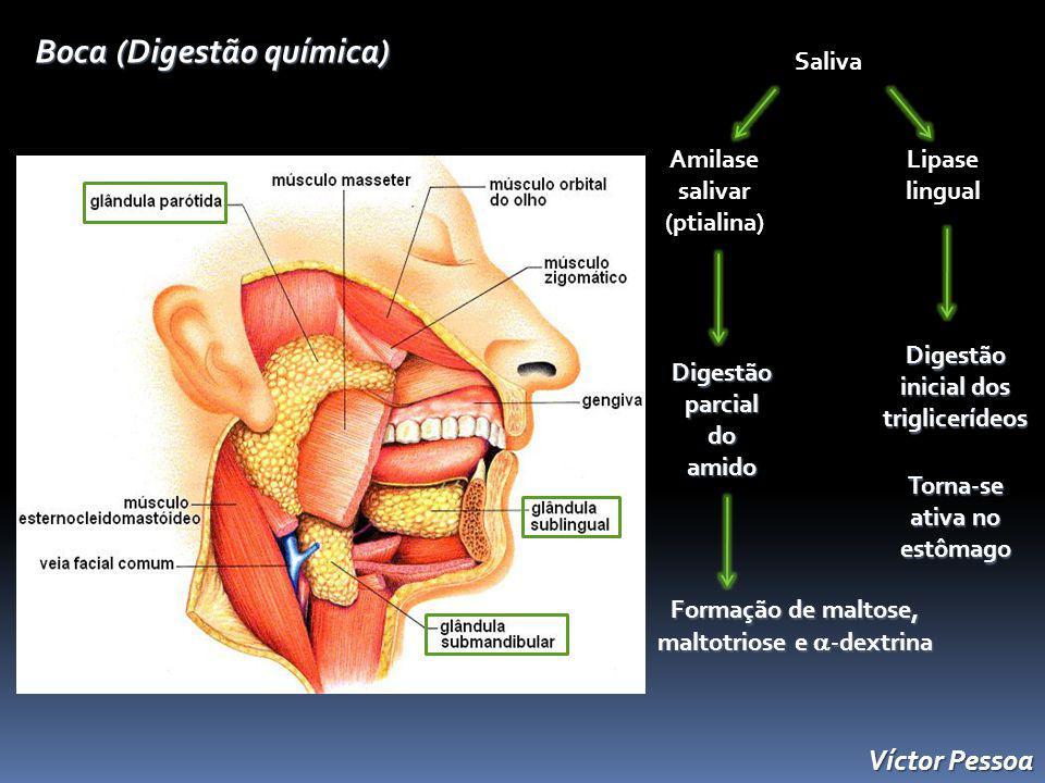 Boca (Digestão química)