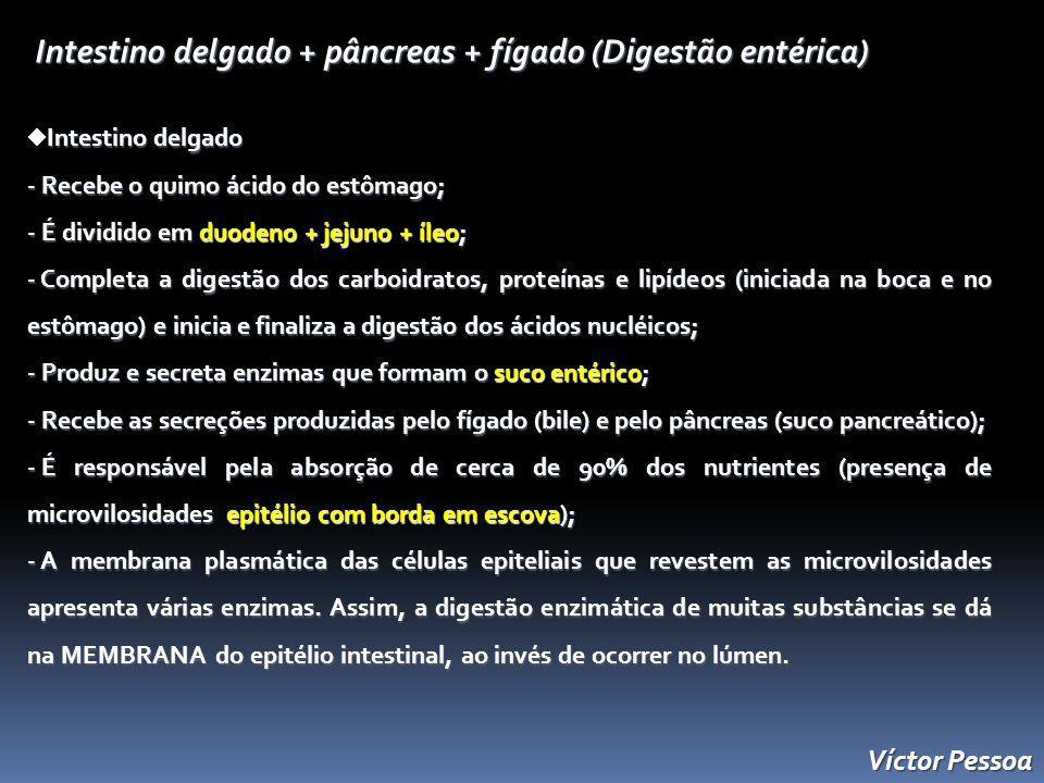 Intestino delgado + pâncreas + fígado (Digestão entérica)