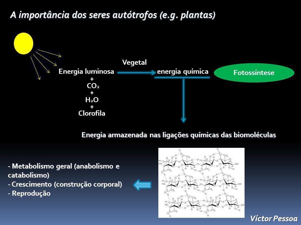 Energia armazenada nas ligações químicas das biomoléculas