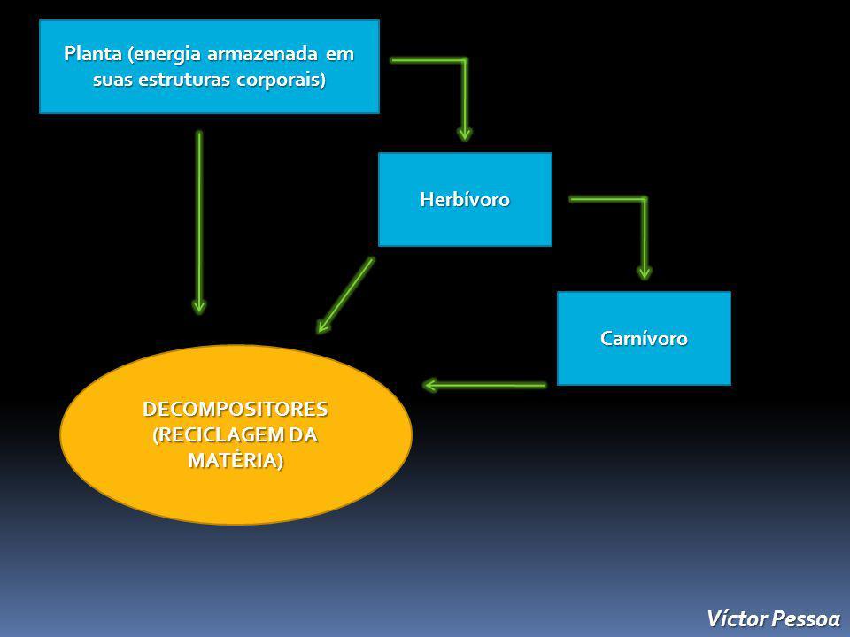 Víctor Pessoa Planta (energia armazenada em suas estruturas corporais)